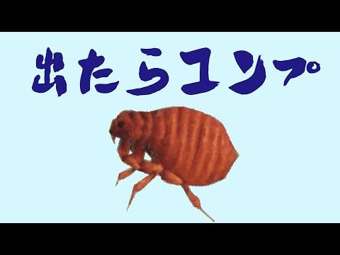 あ つもり 昆虫
