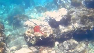 Cute Cute JellyFish Diving in Mallorca of Spain 14