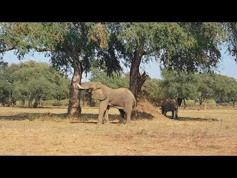 Male elephant in Lower Zambezi National Park