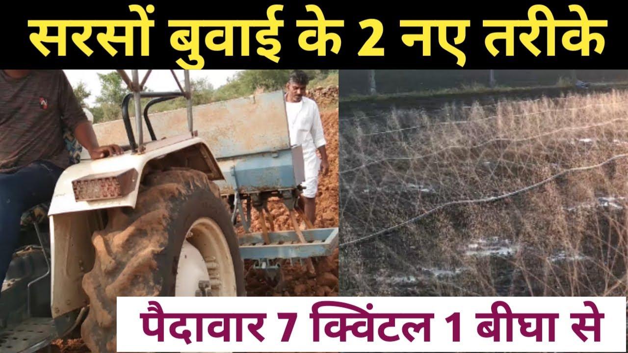 सरसों की बुवाई इन 2 नये तरीकों से करना पैदावार होगी 1 बीघा में 7 क्विंटल   musterd farming in hindi