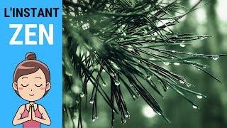 L'INSTANT ZEN #016 - Pluie et orage en forêt