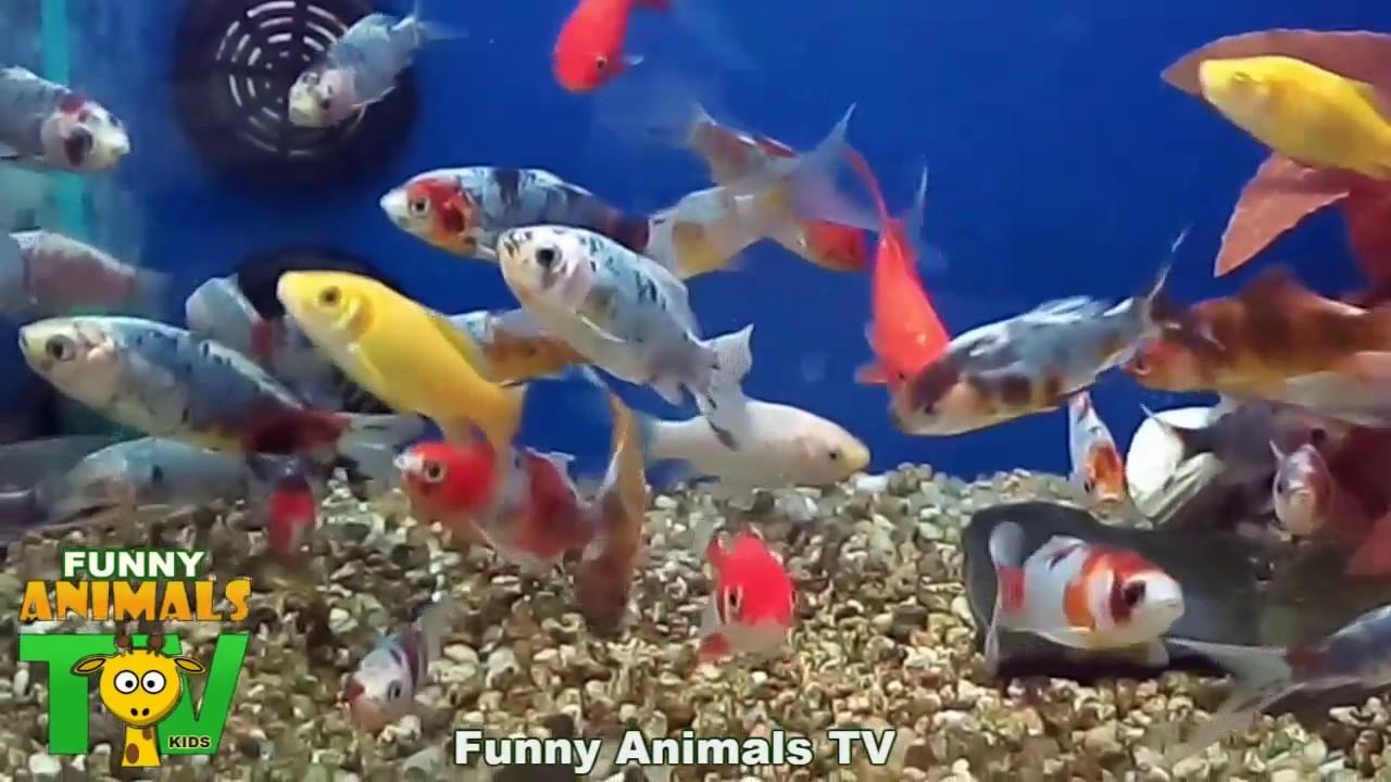 Aquario Com Peixes Coloridos Aquarium With Colorful Fishes Fun