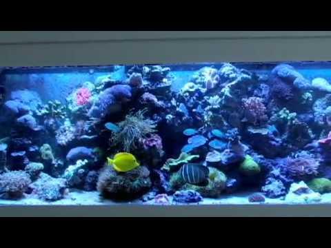 70 G. Sump   December 2008   Saltwater Aquarium   YouTube