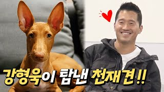 A genius dog coveted by Kang Hyung-Wook, a 3-month-old mysterious pharaohhound and tugging game