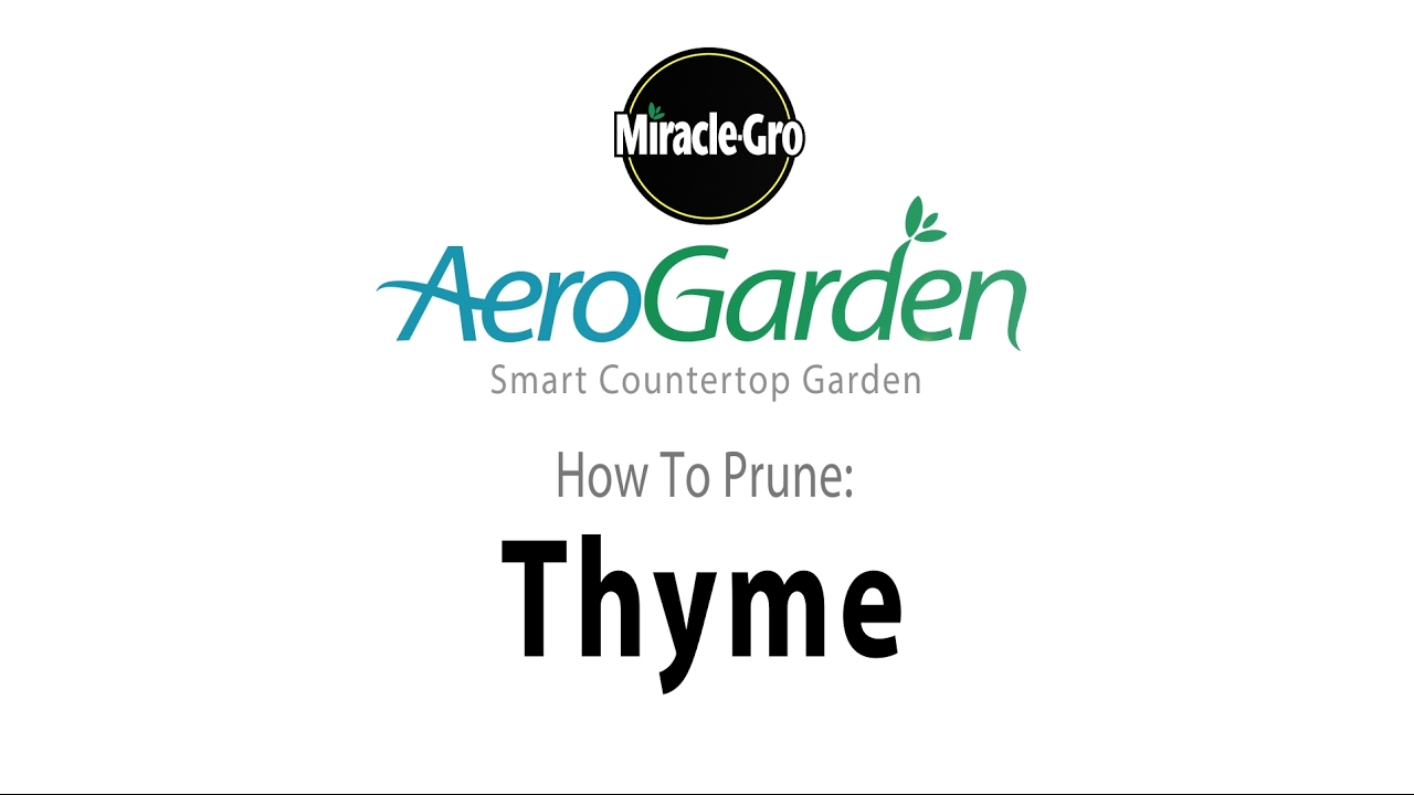 Watch How to Prune Thyme video