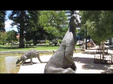 Perth - Kangaroos outside Council House