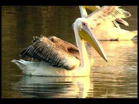 KEOLADEO NATIONAL PARK BIRD SANCTUARY