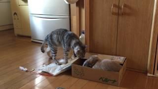 ウサギのピーターとネコのコマは気が合うみたいで、よく遊んでますよ。