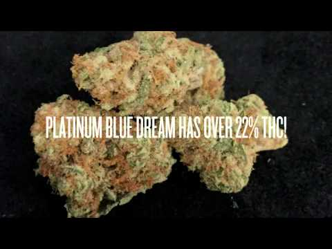Euphoria Wellness Medical Marijuana - Strain Showcase - Platinum Blue Dream