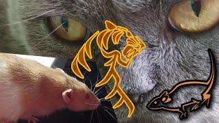КОШКА И КРЫСА. Реакция кошки на крысу.(дружба животных)РАЗВЛЕЧЕНИЯ