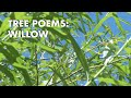 Tree Poems: Willow - on WoodlandsTV