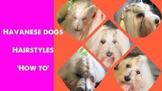 Havanese dogs and puppies ~ hair styles 'how to'