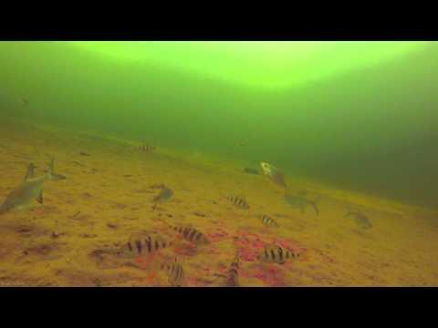 ловля плотвы зимой видео