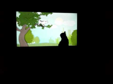 My cat watching a cat documentary