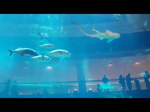 dubai aquarium and underwater zoo at dubai mall | shark | crocodile |