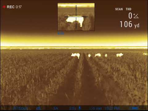 Shooting Pigs With Pulsar Trail 2 XP50 LRF