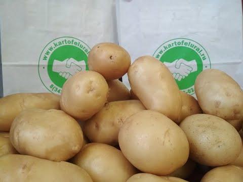 Семена картофеля из Свердловской области.Документы для экспорта.
