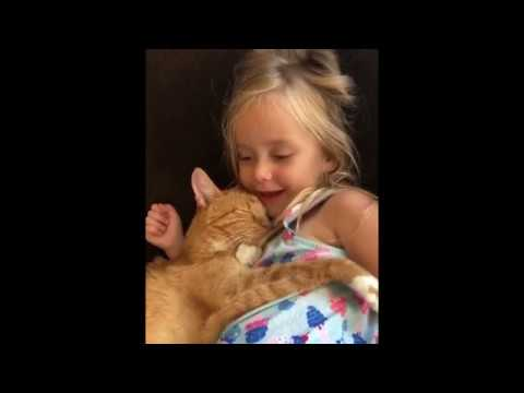 😻 Cats🐱Funniest And Cutest BABY videos . Amazing Of The 2019