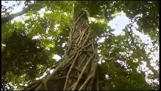 Regenwald   Lunge der Natur Doku deutsch
