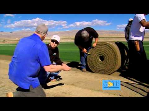 California's Gold #13008 - BASEBALL SOD