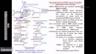 Recombinational repair of stalled replication fork