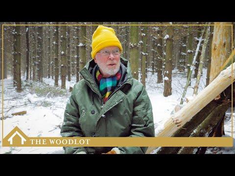 THE WOODLOT - ONTARIO, CANADA