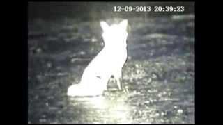 Yukon Photon Night Vision : NM400IR vs NM800IR Field Test