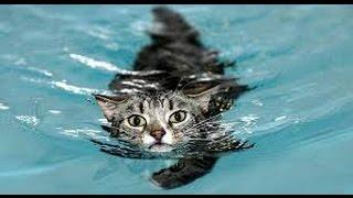 Смешные видео про кошек. Мокрые кошки!