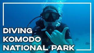 Scuba Diving Komodo National Park - Manta Rays, Sharks, Turtles And More! | Backpacker Banter