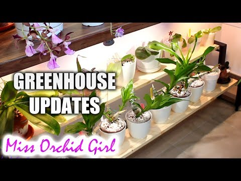 Greenhouse and Orchid Updates - More lights, Miltoniopsis & Dendrobiums