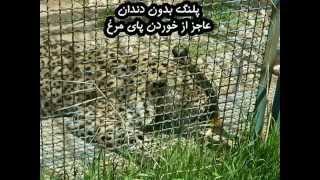 ✦ZOO OF HORROR & TERROR AT SHIRAZ-IRAN(Part.1)✦