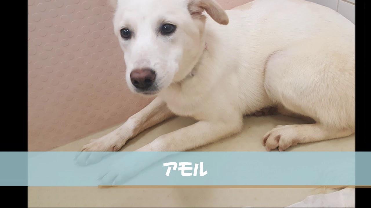 広島 保護 犬
