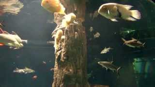 Aquascaping Ideas Aquarium Fish Videos Hd Music Aquascaping Ideas & Planted Tropical Fish Videos