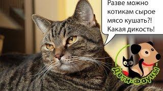 Кормление собаки (кошки) по системе БАРФ, небольшой обзор, положительные и отрицательные стороны