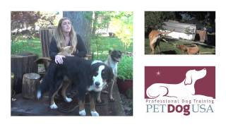 Ask Emily: Intro To New Q&a Series W/ Professional Dog Trainer Emily Ronnow