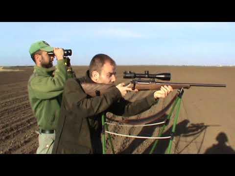 WILD Jaeger Roe Buck Hunting in Serbia (Lov Srndaca), Vukašin Prelević
