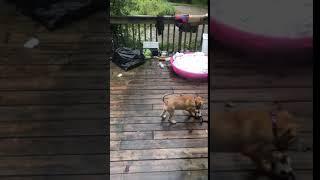 Adopt Bowen on Adopt-a-Pet.com
