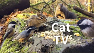 cat videos for cats to watch  Beautiful Birds and Squirrels in Canadian Forest