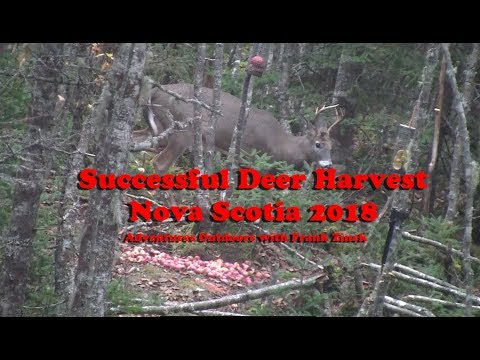 Successful Deer Hunt In Nova Scotia