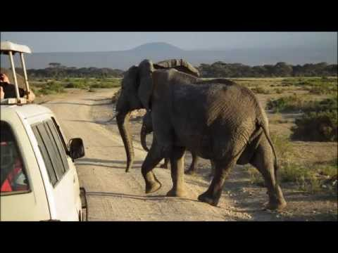Kenia Safari 2015 - Amboseli National Park - Mount Kilimanjaro  - Lion vs Masai