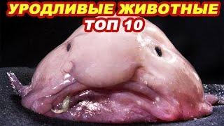 Самые страшные и уродливые животные в мире.  Рейтинг Топ 10