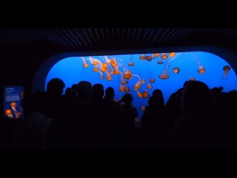 Quick Walkthrough - Monterey Bay Aquarium 2014