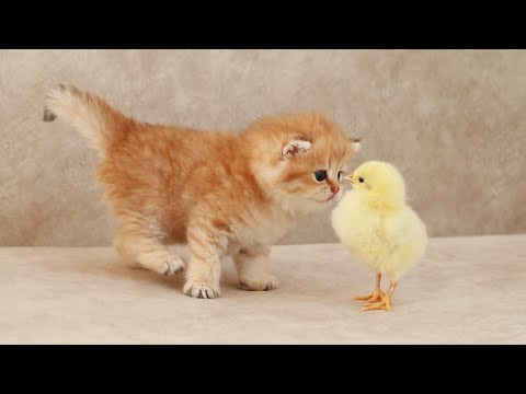 Fluffy orange meets with the yolk