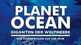 Den Hammerhaien auf der Spur (2009) [Dokumentation]   Film (deutsch)