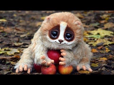 Top 10 D'animaux Adorables Qui Peuvent Pourtant te Tuer