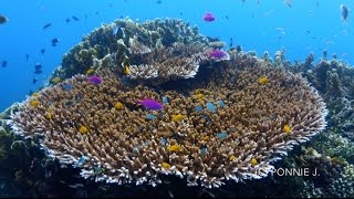 Olympus TG-Tracker : Diving in Dauin, Philippines (HD)