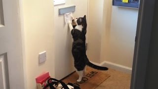 Cats Getting Mail Compilation thumbnail