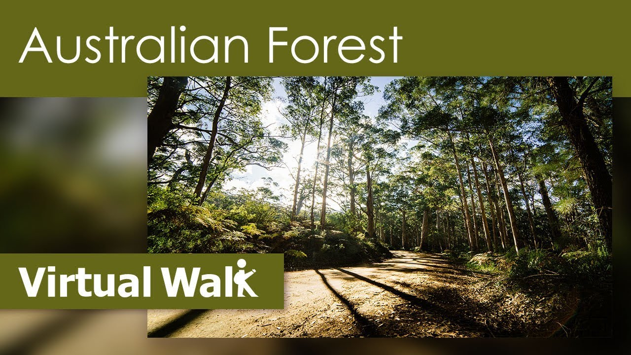 Walk at home australian forest with nature sounds youtube for Australian rainforest