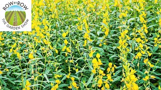 REFRESH AND RENEW YOUR SOILS WITH THESE WARM-SEASON COVER CROPS!