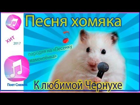 """Песня хомяка """"К любимой Чернухе"""". Поёт Снежок. Пародия на """"Песенку мамонтёнка""""."""